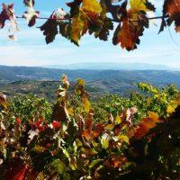 Viñas Sotoserrano