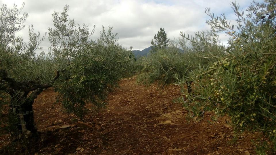 agroturismo Sierra de Francia
