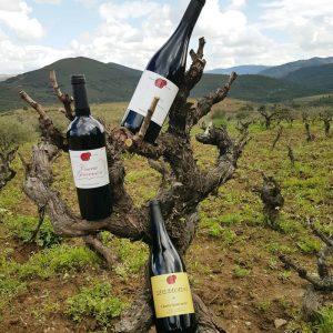 vinos sierra de francia cuarta generacion