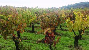 vino sierra de francia bodegas cuarta generacion
